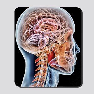 Internal brain anatomy, artwork Mousepad